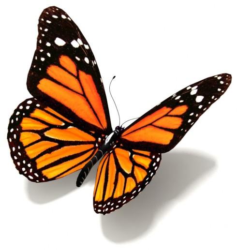 butterfly-orange-969x1024